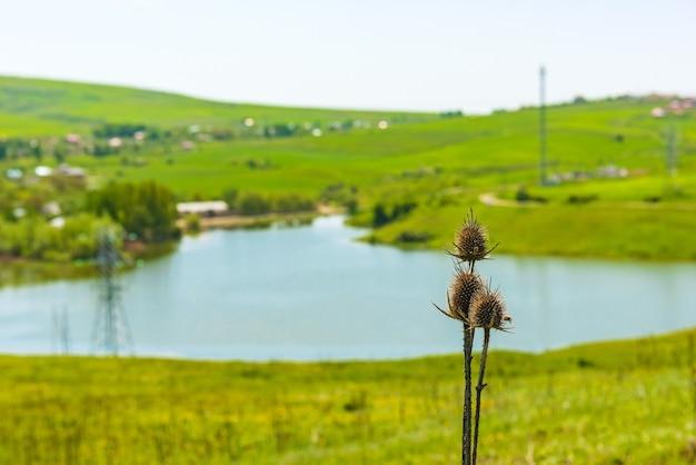 Vagens de sementes de cardo perto do lago