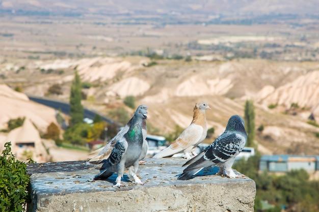 Vale das pombas vista panorâmica perto do castelo uchisar ao nascer do sol, capadócia, turquia
