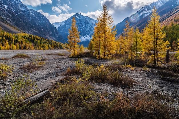 Vale do outono do rio aktru no sopé das geleiras da cordilheira de chuysky do norte, rússia