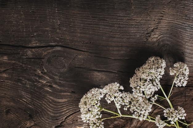 Valeriana officinalis em um antigo fundo de madeira escura