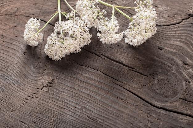 Valeriana officinalis no antigo fundo de madeira escuro