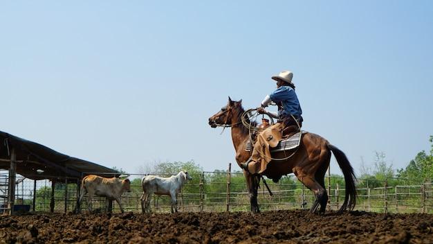 Vaqueiro, montando, cavalo, e, vaca, em, a, terra cultivada