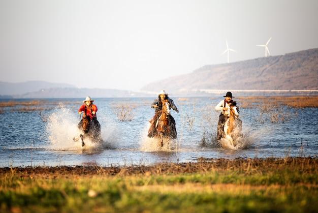 Vaqueiro, montando, cavalos, em, a, campo
