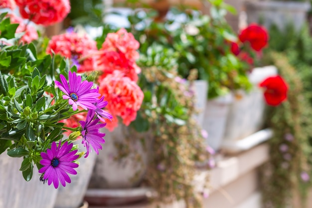 Varanda decorada, flora de clima mediterrâneo.