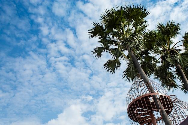 Varanda e açúcar palmeiras.