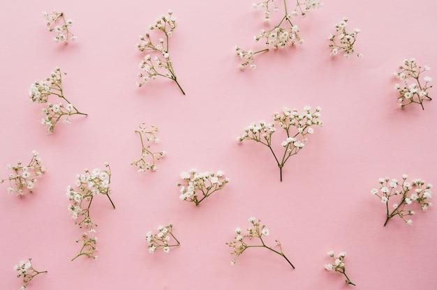 Variação das flores da respiração do bebê pequeno em um fundo rosa claro