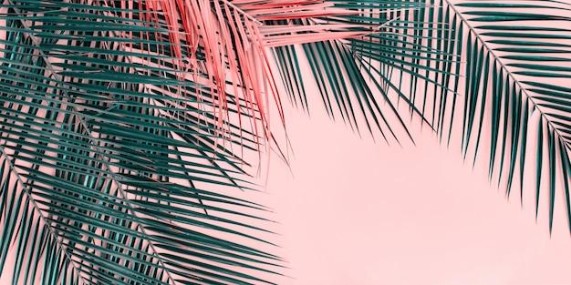 Variações tropical palm leaves flat lay top view