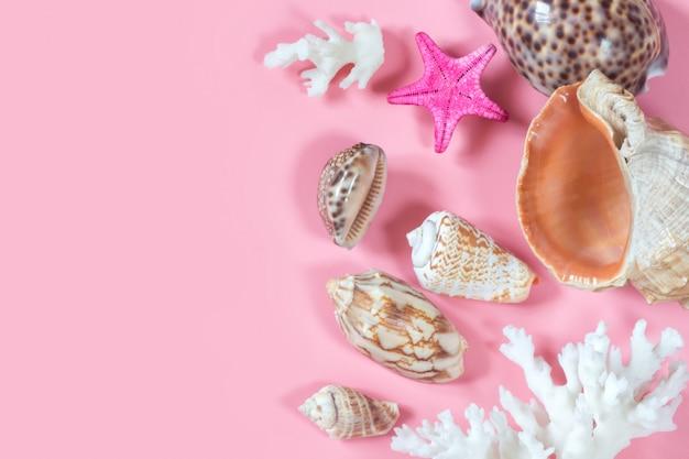 Várias conchas de moluscos marinhos, estrelas do mar, corais. marinha composição decorativa em rosa pastel.