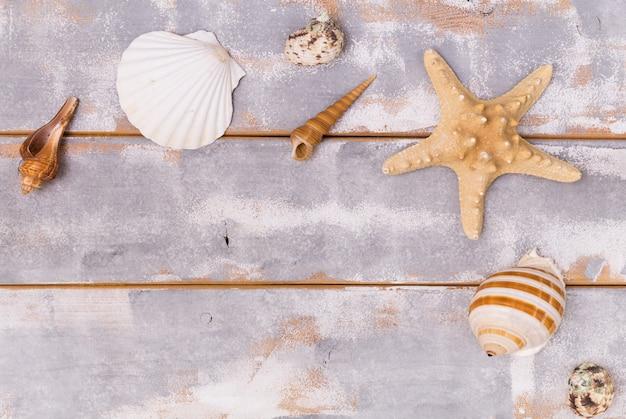 Várias conchas e estrelas do mar em um fundo de madeira viajam e férias de fundo.
