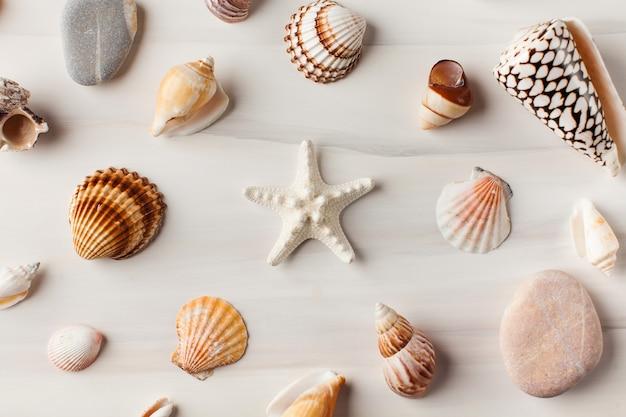 Várias conchas em branco