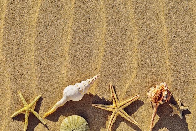 Várias conchas em uma praia de areia com vista superior do espaço de cópia
