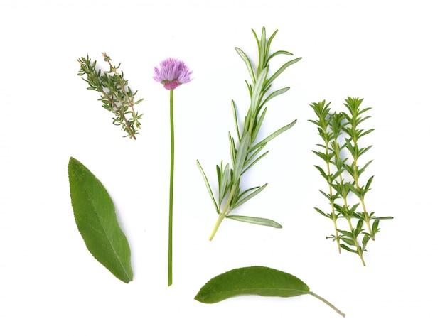 Várias ervas aromáticas frescas no fundo branco