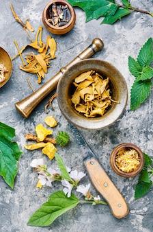 Várias ervas e flores medicinais