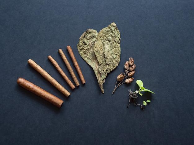 Várias etapas na produção de charutos. charutos acabados, folhas de tabaco, brotos de tabaco e sementes são dispostos em uma mesa preta.