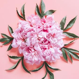 Várias flores de peônia em plena floração rosa pastel e folhas isoladas em fundo rosa pálido. disposição plana, vista superior. quadrado