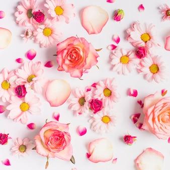 Várias flores e pétalas