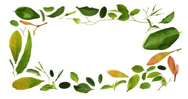 Várias folhas isoladas colocam no fundo branco como forma de quadro retângulo. design para decoração. vista do topo. limpo e minimalista
