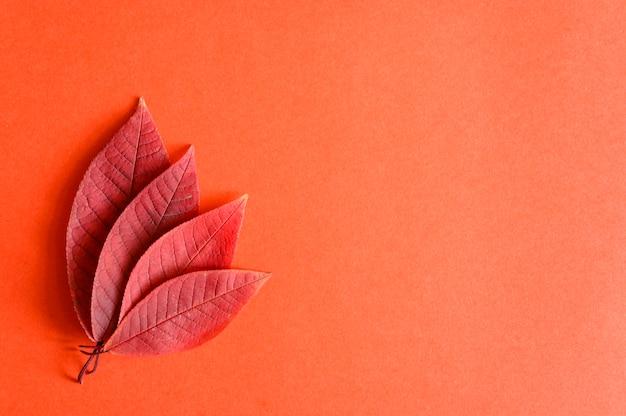 Várias folhas vermelhas de cereja de outono caídas em um plano de fundo de papel vermelho