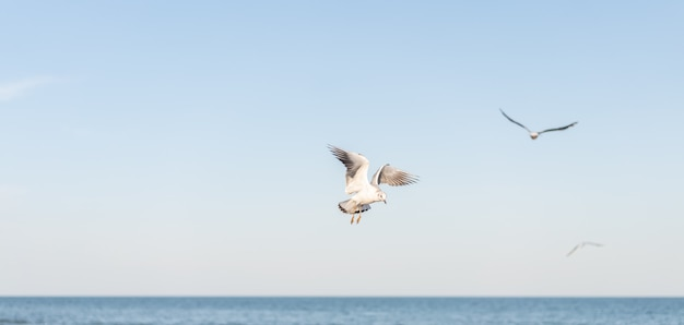 Várias gaivotas brancas lindas voam sobre a superfície da água do mar