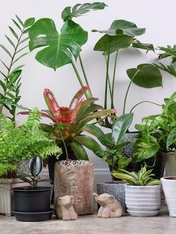 Várias plantas caseiras no chão de cimento e uma estátua de elefante em um quarto branco purificam com monsteraphilodendron selloum cactusaroid palmzamioculcas zamifoliaficus lyrataspotted betelsnake plant