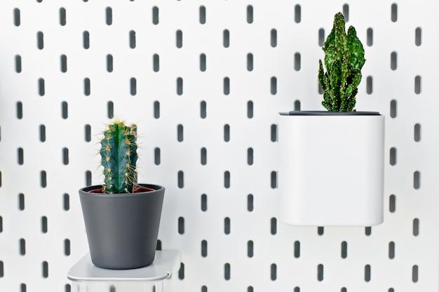 Várias plantas da casa do cacto em panelas cinzas contra a parede branca