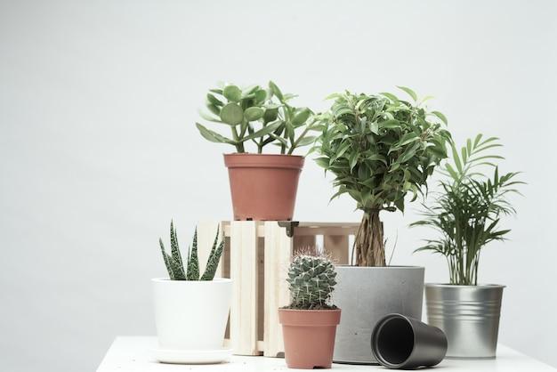 Várias plantas de interior, cactos em vasos em um fundo limpo e vazio