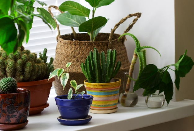 Várias plantas de interior em vasos e uma cesta de bambu no peitoril da janela.