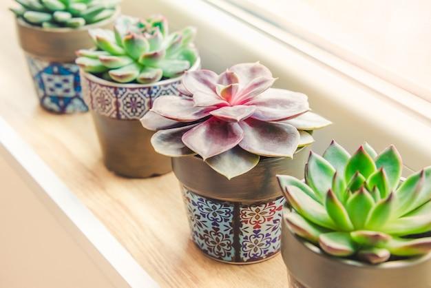 Várias plantas suculentas organizadas pela janela.