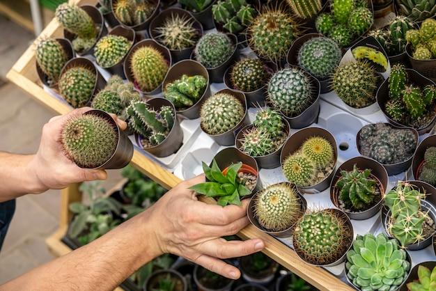 Variedade close-up de cactos em vasos