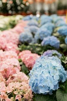 Variedade com lindas flores coloridas dentro de casa