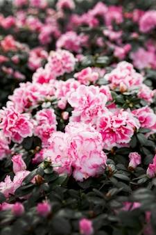 Variedade com lindas flores cor de rosa