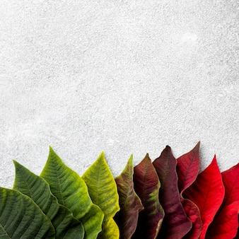Variedade da vista superior de folhas coloridas com espaço de cópia