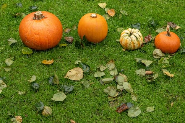Variedade de abóboras coloridas entre as folhas de outono na grama. decoração do conceito de helloween.