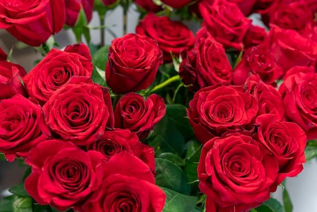 Variedade de close-up de lindas rosas vermelhas