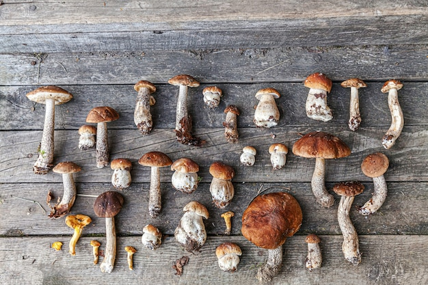 Variedade de cogumelos comestíveis crus penny bun boletus leccinum em mesa rústica