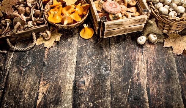 Variedade de cogumelos da floresta
