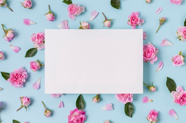 Variedade de conceito de rosas cor de rosa