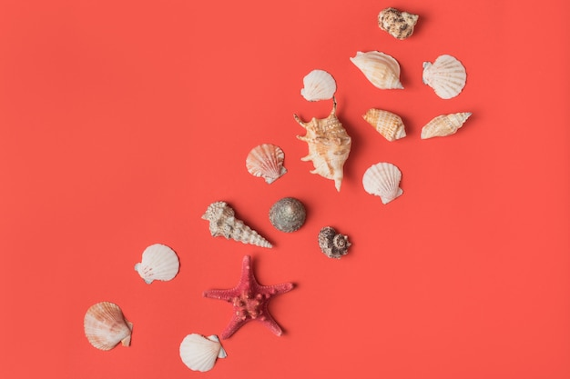 Variedade de conchas do mar no fundo de coral vivo. postura plana. conceito marinho