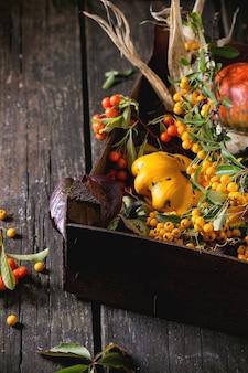 Variedade de diferentes abóboras e frutas