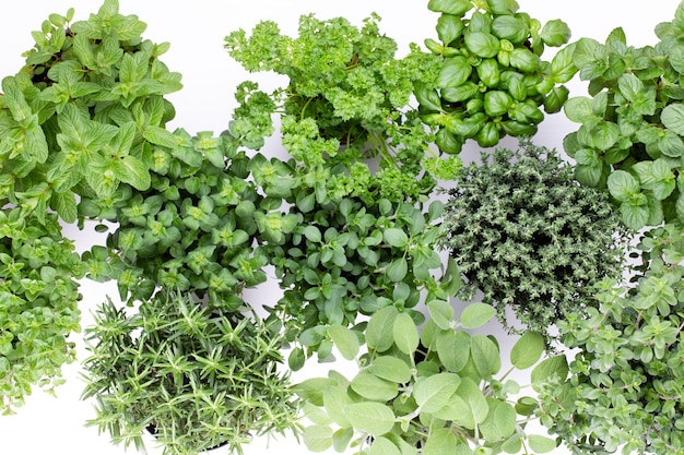 Variedade de ervas frescas isoladas no fundo branco. manjerona, salsa, manjericão, alecrim, tomilho, sálvia.