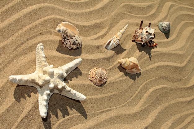 Variedade de estrelas do mar e conchas de diferentes formas e cores na costa arenosa do mar no verão