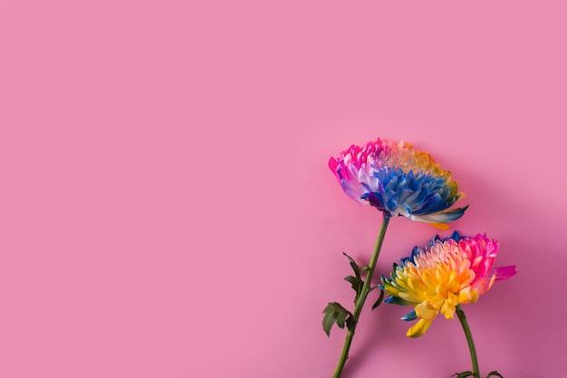 Variedade de flores coloridas da primavera