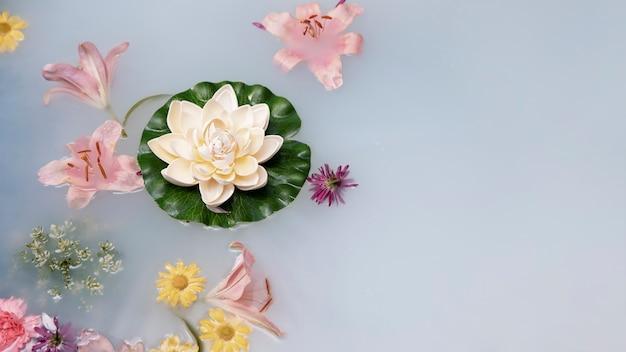 Variedade de flores terapêuticas
