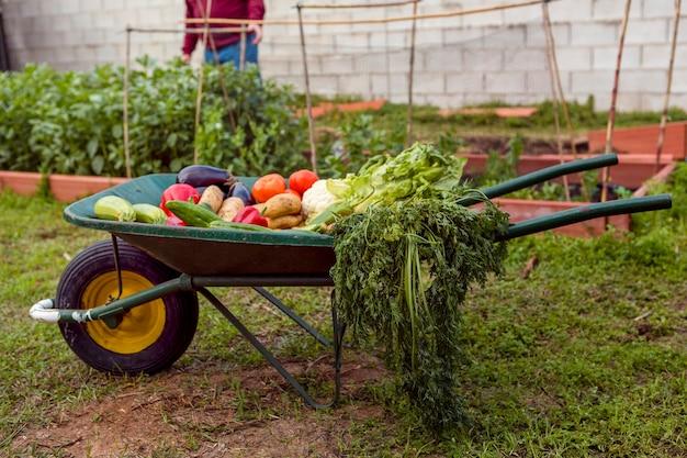 Variedade de legumes no carrinho de mão