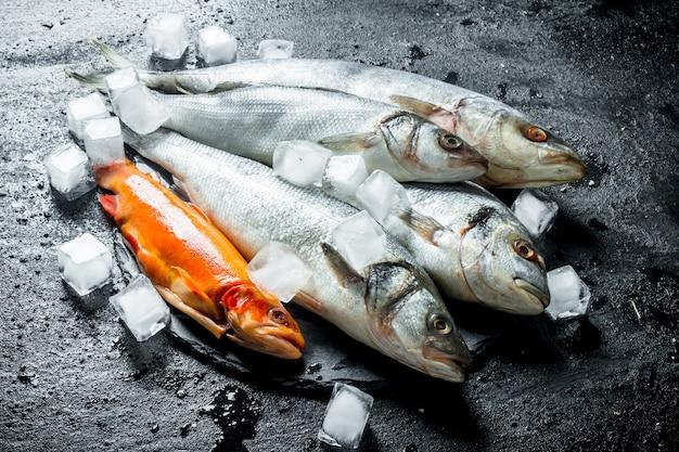 Variedade de peixes crus com cubos de gelo. na mesa rústica preta
