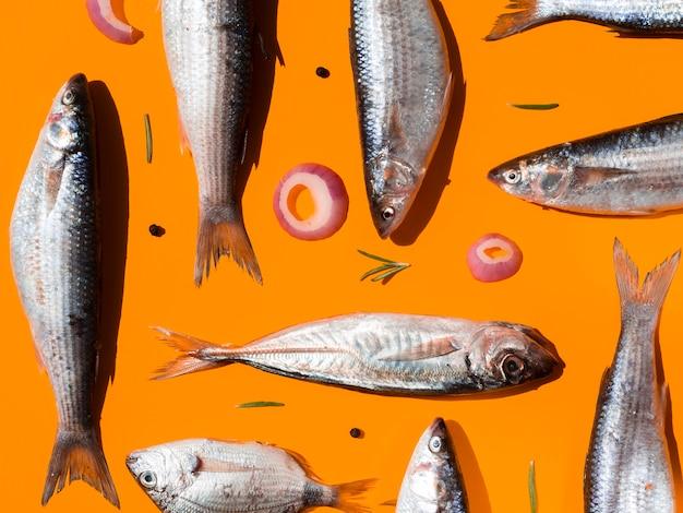 Variedade de peixes crus com guelras