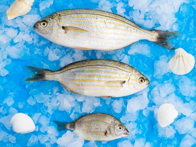 Variedade de peixes deitado em cubos de gelo