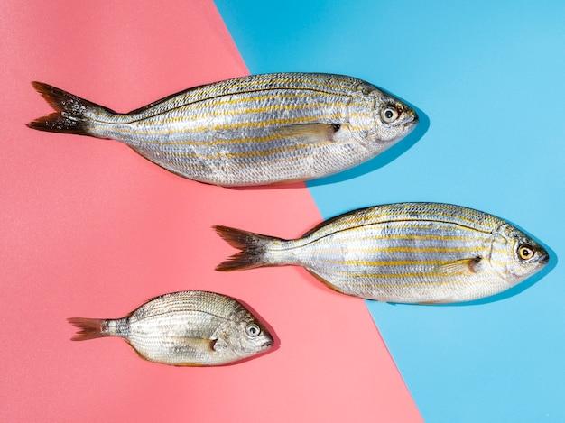 Variedade de peixes frescos com guelras