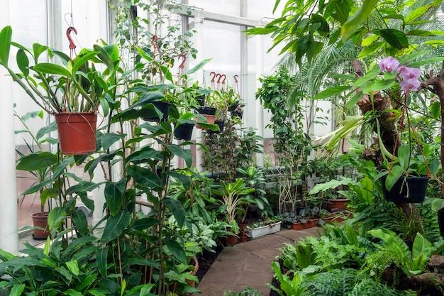 Variedade de plantas e flores dentro de uma estufa botânica.