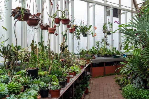 Variedade de plantas e flores dentro de uma estufa botânica